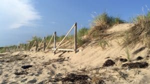 sandy dunes and beach with beach gass
