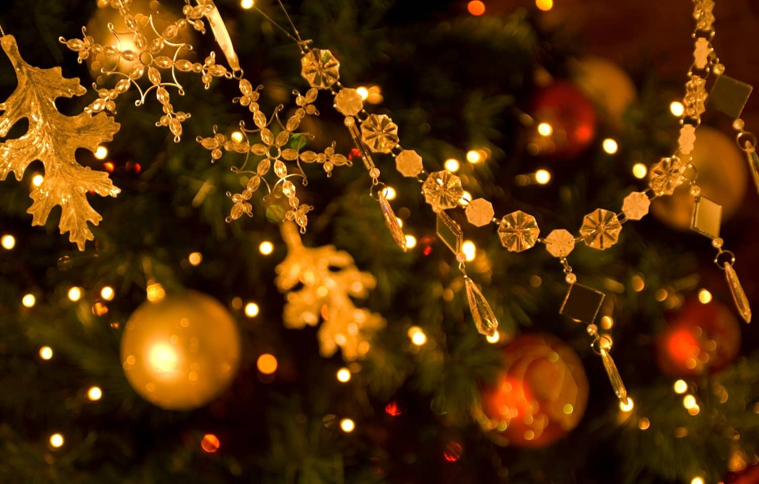 8 Of The Best Cape Cod Christmas Events