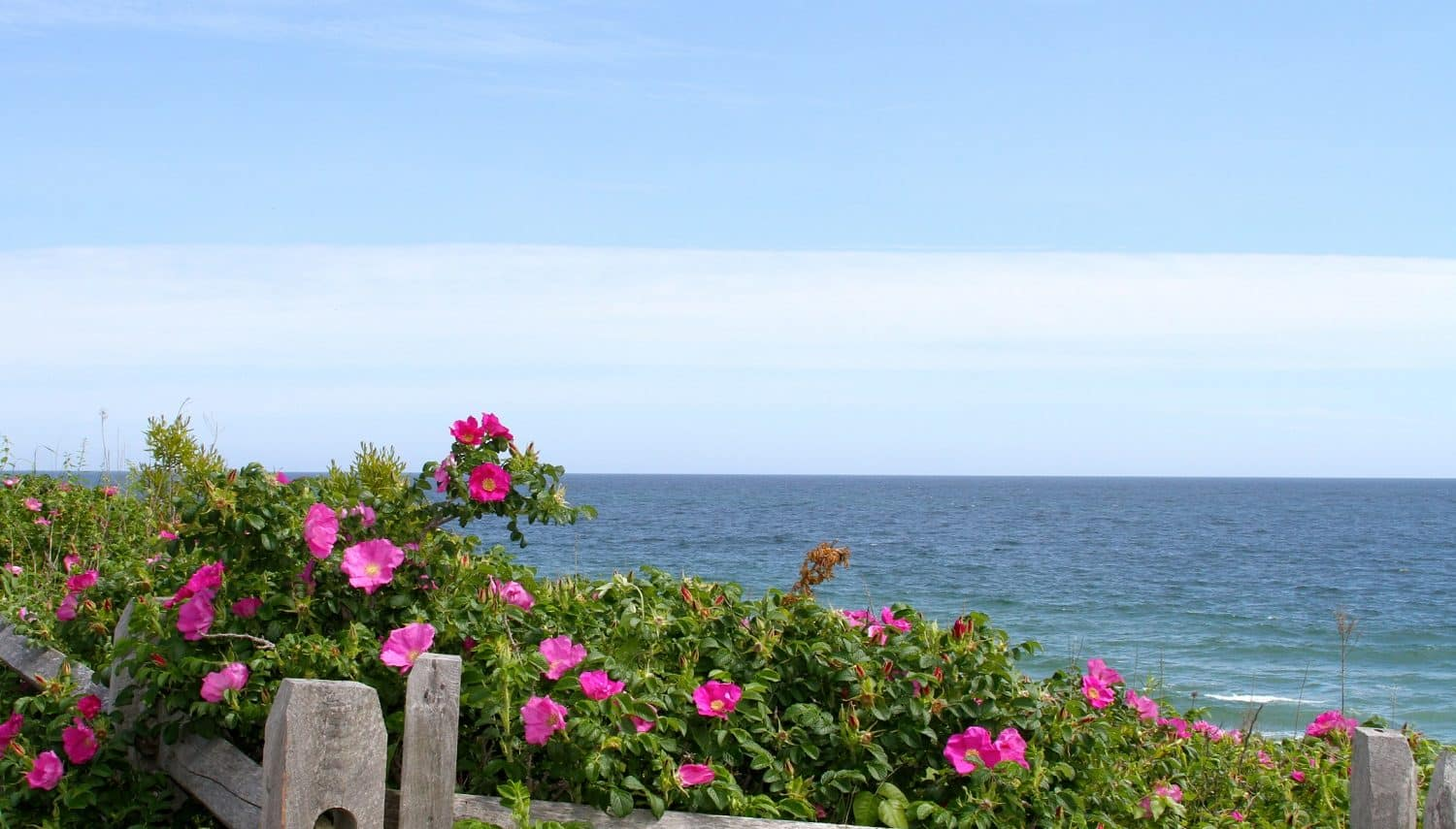 Ocean view on the Cape Cod National Seashore