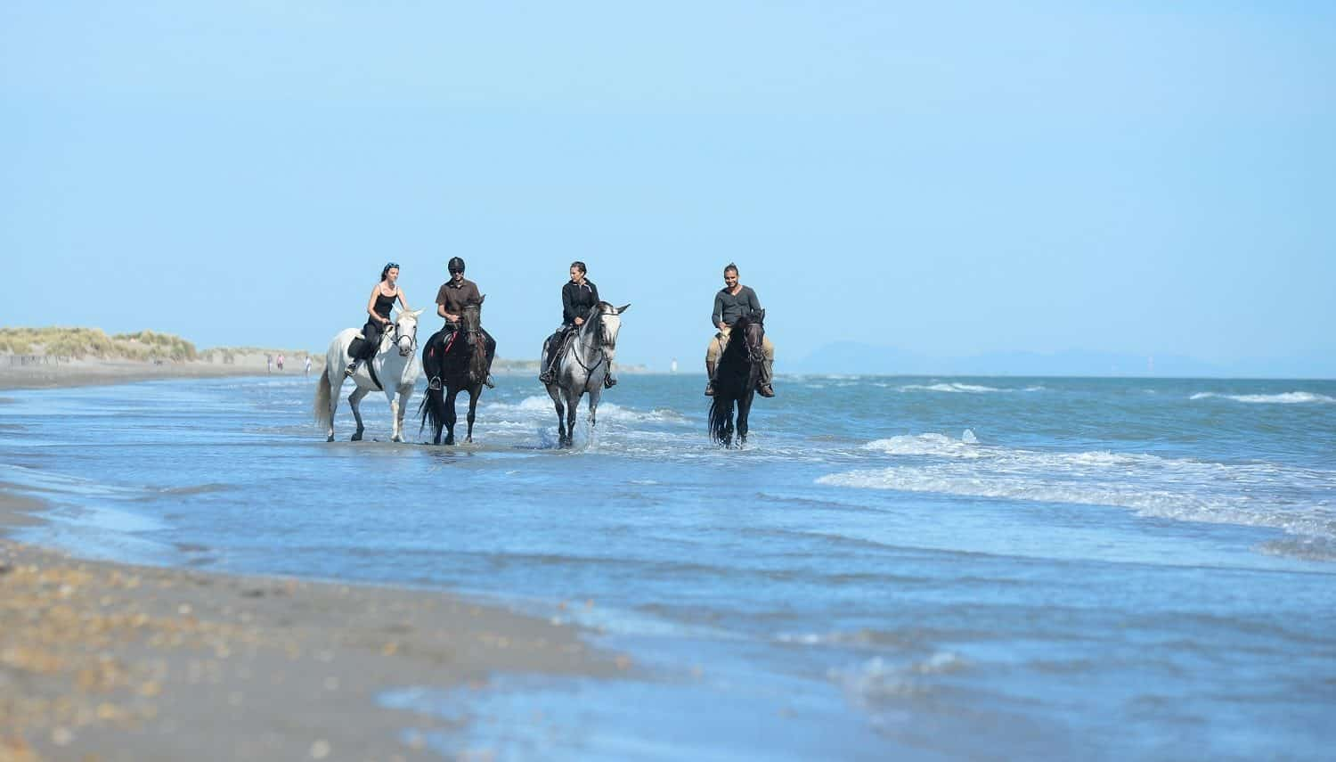 Cape Cod horseback riding