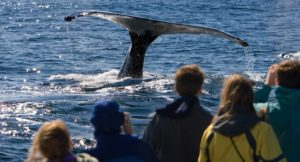 A group of people whale watching on Cape Cod in the summer